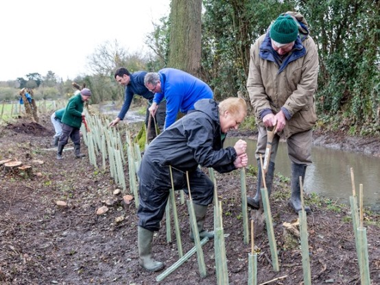 Tree planting in Harlow